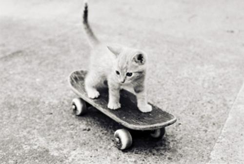 kittyboard.jpg